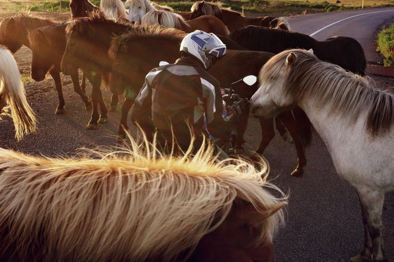 BMW motorcyclist in a herd of horses.